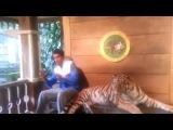 Тигр и Араб  www.kinoreal.net - Онлайн кино России 